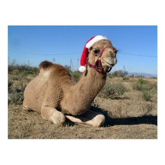 Christmas camel postcard