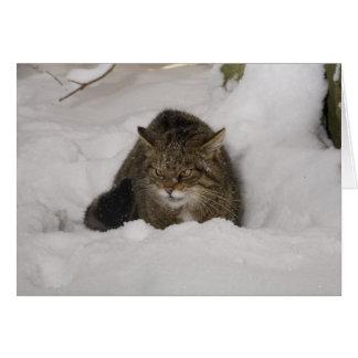 Christmas card - Scottish wildcat