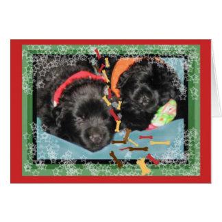 Christmas Card~Sleeping Newf pups Card