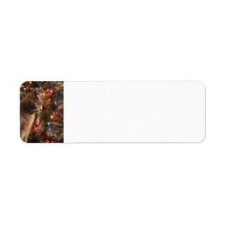 Christmas Cat Address labels - grey cat