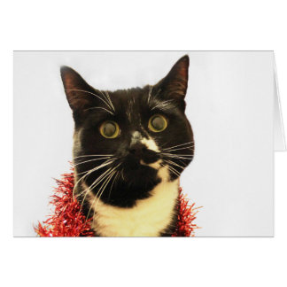 Christmas Cat Card