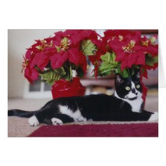 Christmas Cat Greeting Card