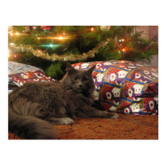 Christmas Cat Postcard