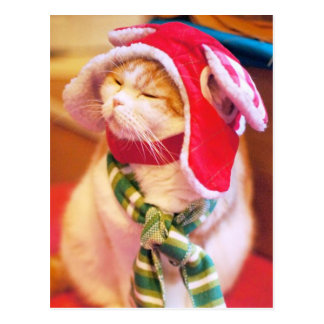 Christmas cat with bonnet and scarf postcard