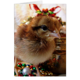 Christmas Chick 3 Card