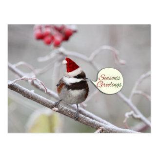 Christmas Chickadee Postcards