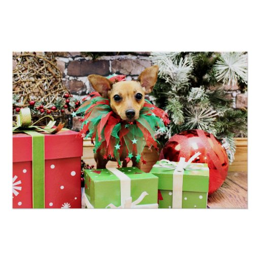 Christmas - Chihuahua - Daisy Poster