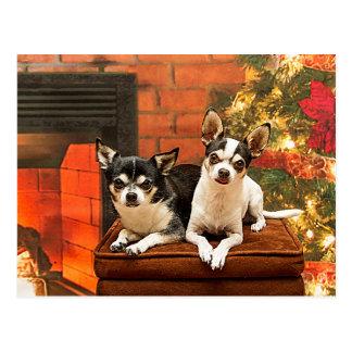 Christmas Chihuahua's Postcard