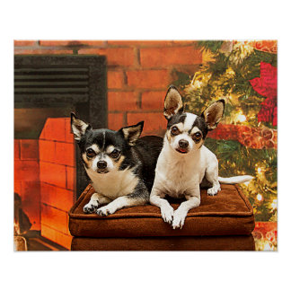 Christmas Chihuahua's Poster