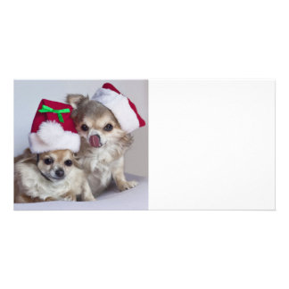 Christmas chihuahuas photo greeting card