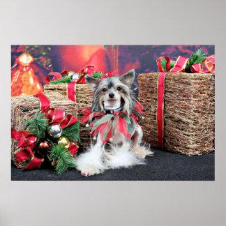 Christmas - Chinese Crested Dog - Sheeba Poster