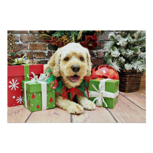 Christmas - Cockapoo - Cooper Poster