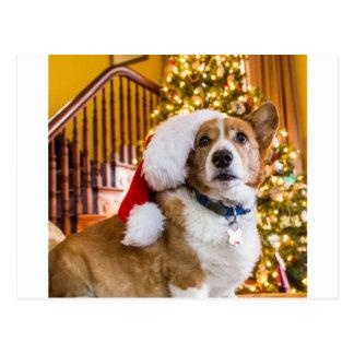 Christmas Corgi Postcard