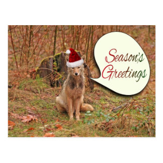 Christmas Coyote Post Cards
