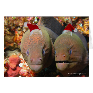 Christmas Eels Card
