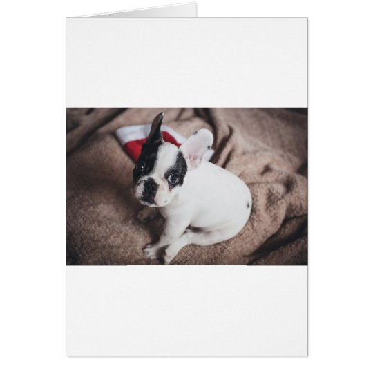 Christmas Frenchie Card