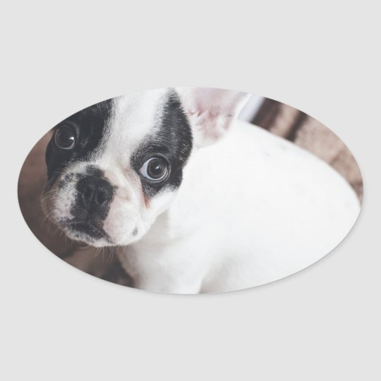 Christmas Frenchie Oval Sticker