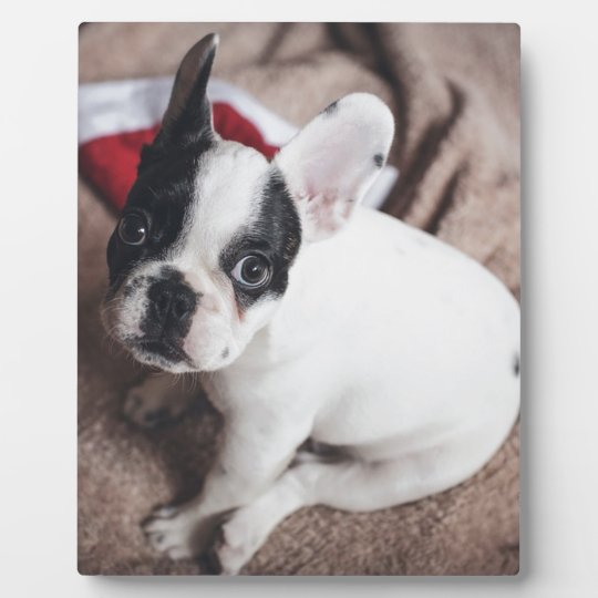 Christmas Frenchie Plaque