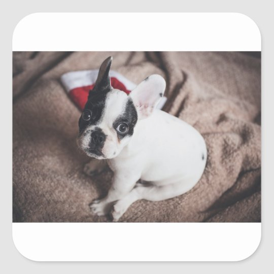 Christmas Frenchie Square Sticker