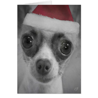 Christmas Funny Chihuahua Puppy with Santa Hat Cards