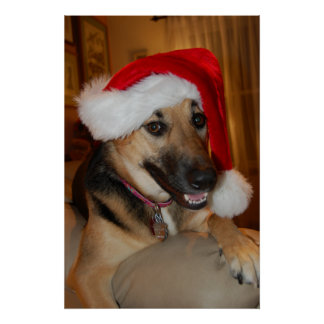 Christmas German Shepherd Poster