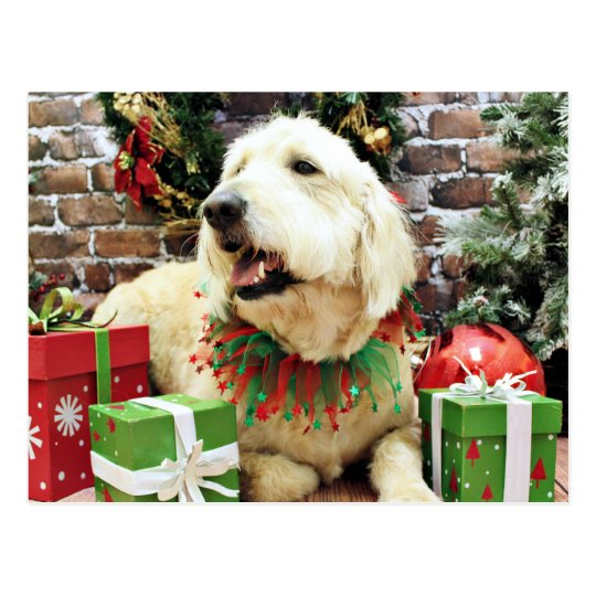 Christmas - GoldenDoodle - Lacey Postcard