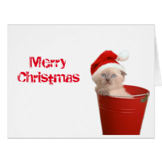 Christmas greeting card kitten.