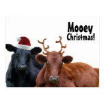 Christmas Holiday Cows in Santa Hat and Antlers Postcards