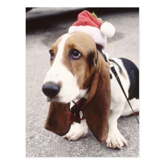 Christmas Hound Postcard