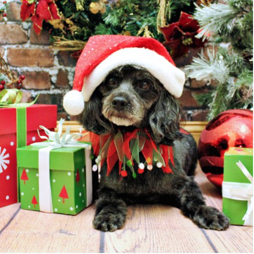 Christmas - LhasaPoo - Leo Acrylic Cut Out