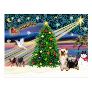 Christmas Magic Silky Terrier (C)- Postcard