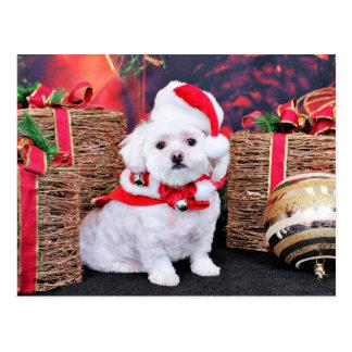 Christmas - Maltese - Zoey Postcard