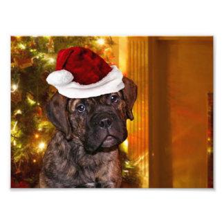 Christmas Mastiff Puppy Art Photo