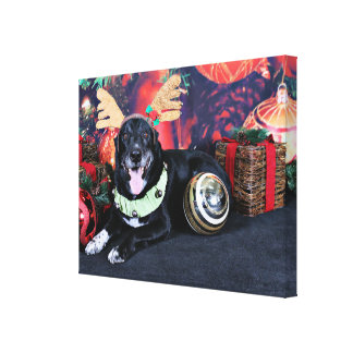 Christmas - Maverick - Border Collie X Canvas Print