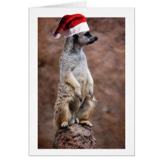 Christmas MeerKat Card