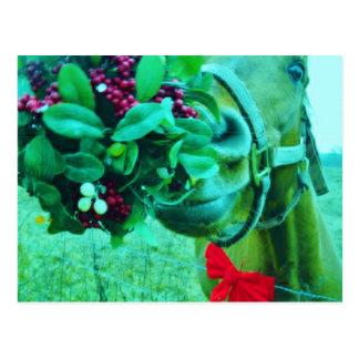 Christmas Mistletoe Teal Horse Postcard