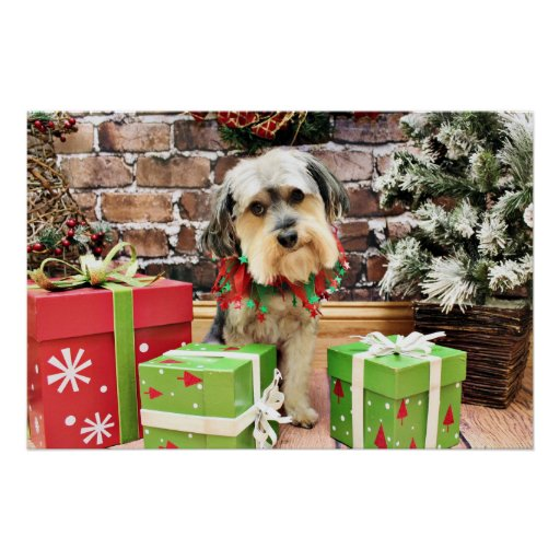 Christmas - Morkie - Cooper Posters