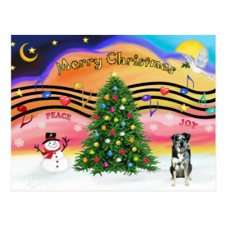 Christmas Music 2 - Catahoula Leopard Dog Postcard