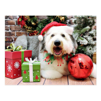 Christmas - Old English Sheepdog - Alphy Postcard