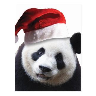 Christmas Panda Bear Postcard
