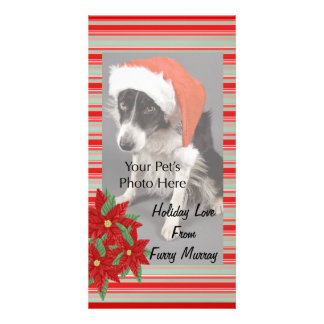 Christmas Photo Cards from your pets!