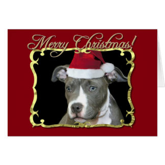 Christmas pitbull dog card