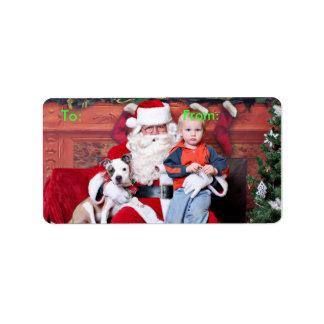 Christmas - Pitbull X - Stella