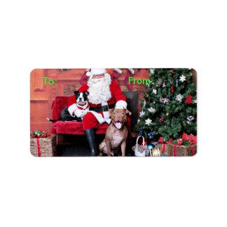 Christmas - Pitbulls - Mia & Lucian
