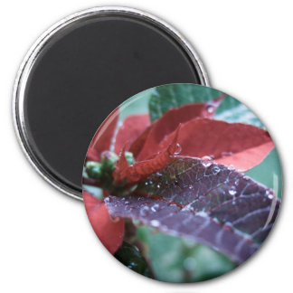 Christmas Poinsettia 2 Inch Round Magnet