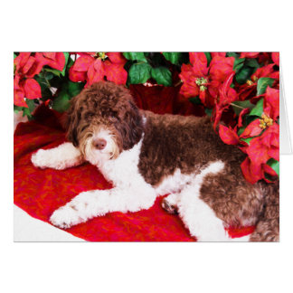 Christmas & Poinsettia Labradoodle Dog Card