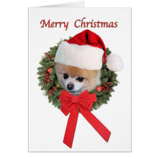 Christmas, Pomeranian Dog, Santa Hat Card