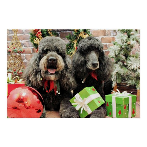 Christmas - Poodle - Cooper and Lily Poster