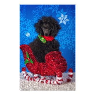 Christmas Poodle Stationery Design