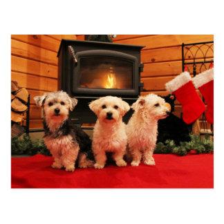 Christmas Postcard - Wood Stove Dogs